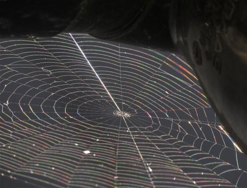 Spiderweb015