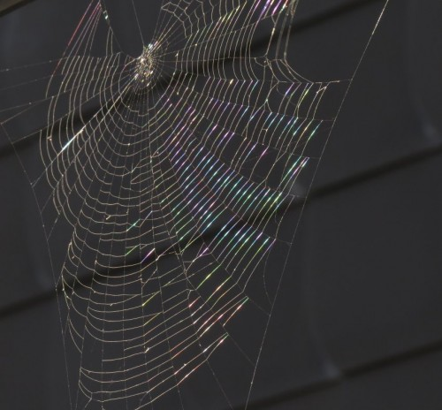 Spiderweb016