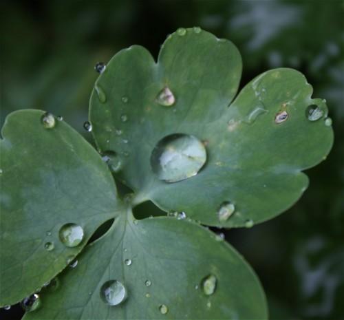 Waterdrops013