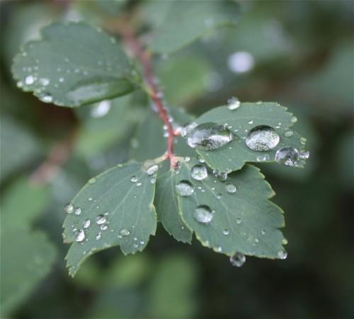 Waterdrops016