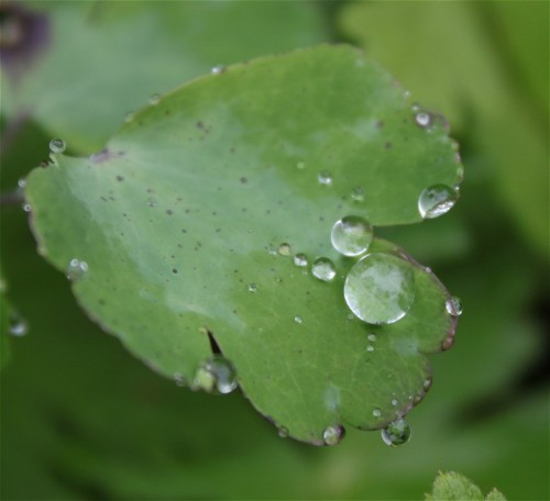 Waterdrops030