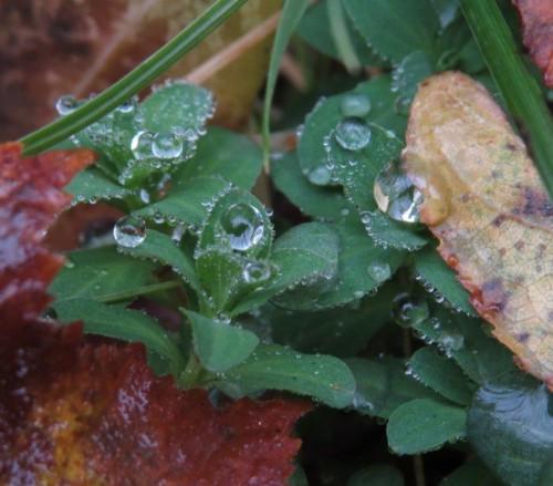 Waterdrops052