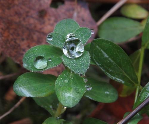 Waterdrops053