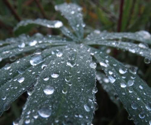 Waterdrops054