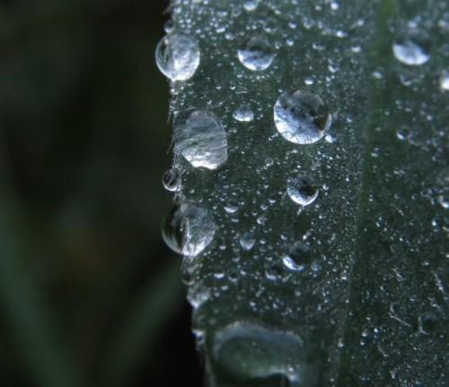 Waterdrops056