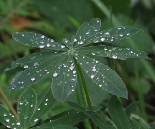 Waterdrops057