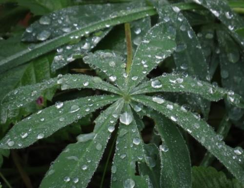 Waterdrops059