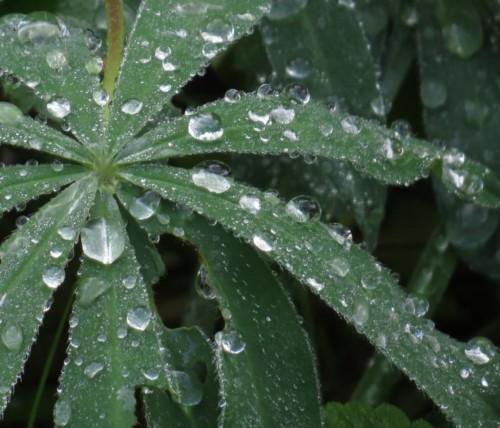 Waterdrops060