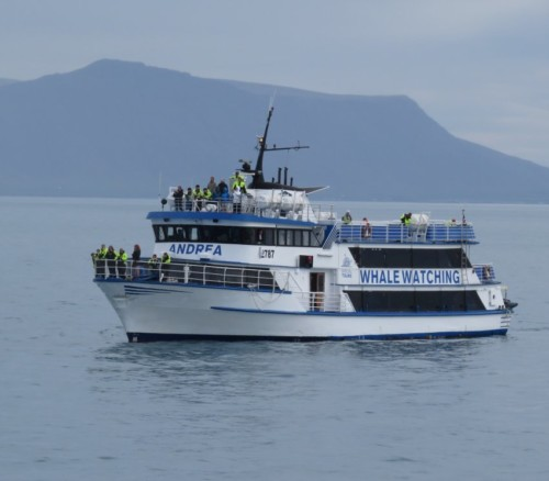 Others - Whale watching - Iceland,Special Tours - Andrea02