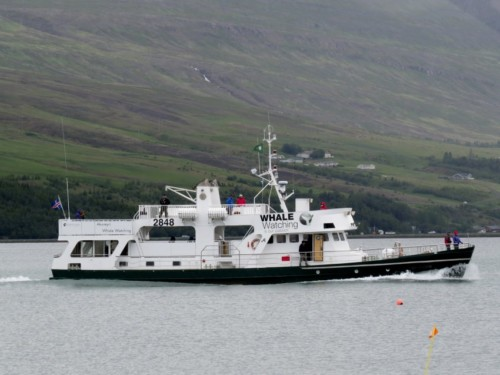 Others - Whale watching - Iceland, Ambassador