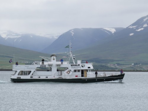 Others - Whale watching - Iceland, Ambassador01